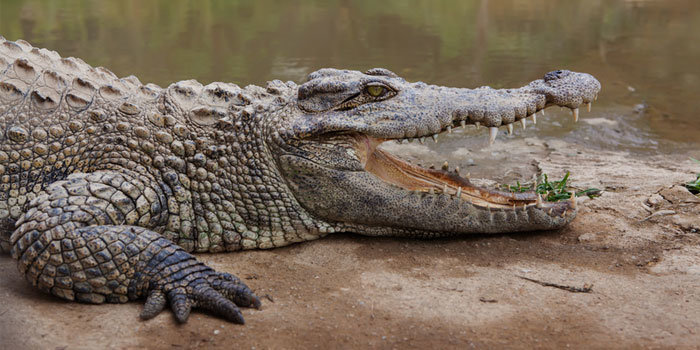 Q: Which 'reporting crocodile' will be nearest the canoe in 2017?